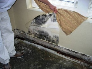 mold-behind-wallpaper